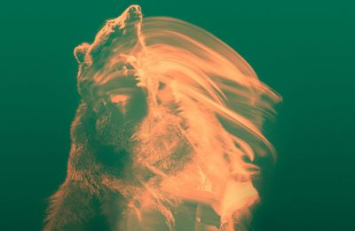 """CD review THE TEMPERANCE MOVEMENT """"White Bear"""""""
