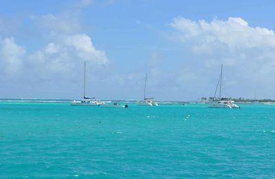 Tobago Cays : un écrin au milieu de l'océan