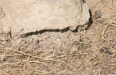 Lutin archéologue