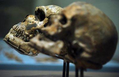 Le cancer existait déjà à l'époque de l'homme de Néandertal