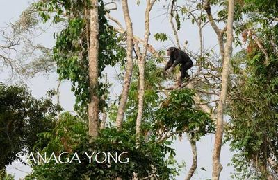 IDA-AFRICA & SANAGA-YONG CHIMPANZEE RESCUE CENTER ​LAUNCH SUSTAINABLE AGRICULTURE PROJECT TO PROTECT THE FOREST
