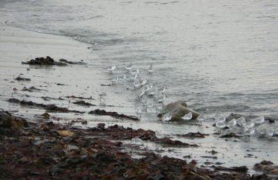 Observations ornithologiques