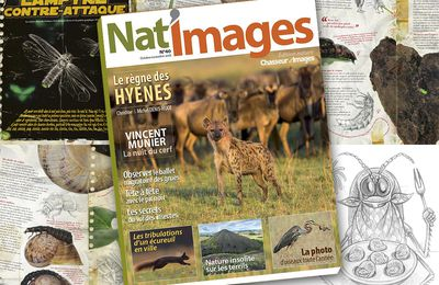 Nat'images n°40 : lumineux !