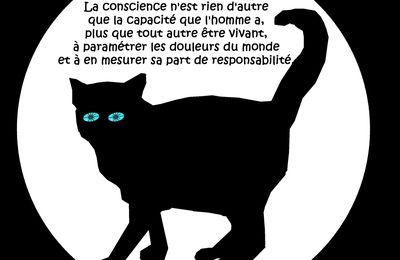 Mon chat dit :