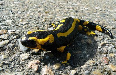 En jaune et noir