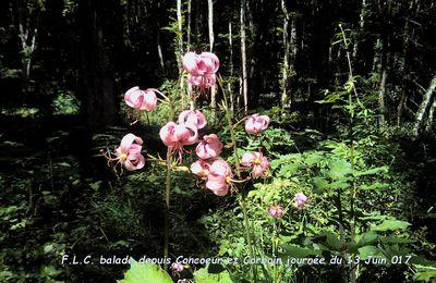 Randonnée en forêt de Mantuan