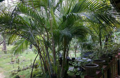 le jardin d'Imali au Sri Lanka
