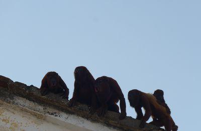 Chant choral à Mompox