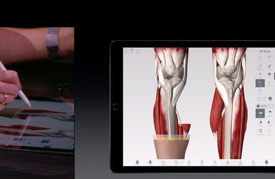 Anatomie sur iPadPro et Apple Pencil ...