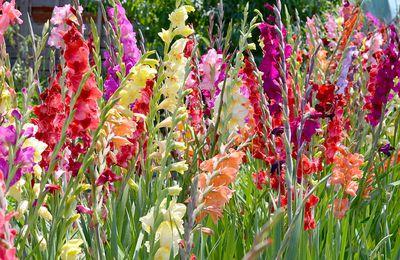 Fleurs et fruits d'été en haïkus pour vendredi 2 septembre