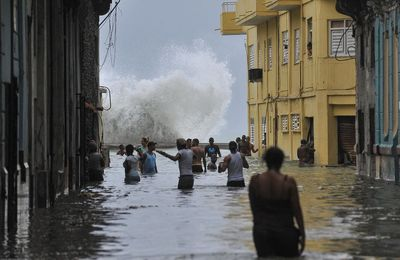 Irma, José, Ouragans - Chaton