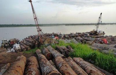 L'Impunité Exportée. Les dirigeants d'entreprises aux États-Unis et dans l'Union européenne pourraient risquer une peine de prison s'ils importent du bois congolais illégal (Global Witness)