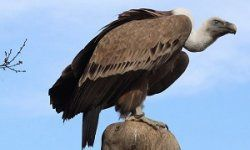 Pourquoi il ne faut pas négocier avec les fonds vautours (CADTM)
