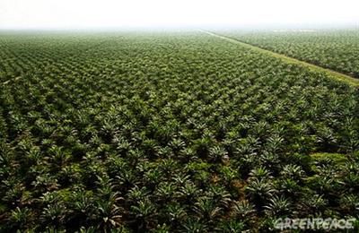 Les investissements saoudiens agricoles à l'étranger : accaparement de terres ou stratégie bénigne ? (Middle East Eye)