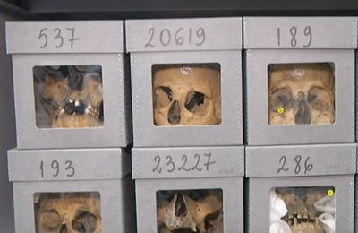 Une association algérienne réclame les crânes des résistants algériens entreposés à Paris (Middle East Eye)