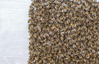 L'essaimage me met les abeilles...