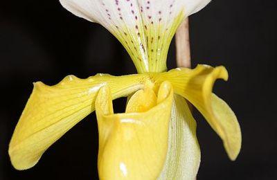 Des orchidées fleuries toute l'année!
