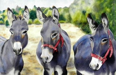 Les ânes .