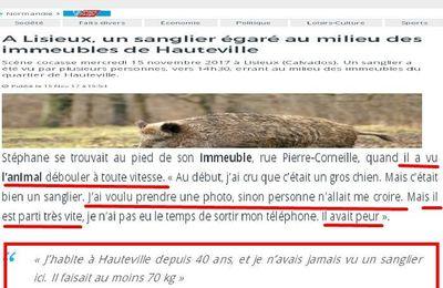 [PERIODE DE CHASSE]Calvados:un sanglier égaré au milieu des immeubles de Hauteville à Lisieux 15/11/2017