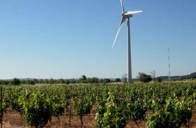Des éoliennes parmi les vignes de l'Aude