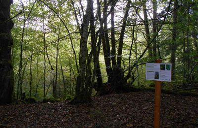 En forêt d'Autun, le souci de favoriser les feuillus