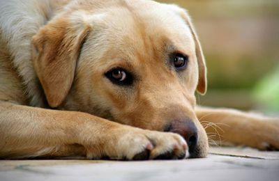 le chien le meilleur ami de l'homme
