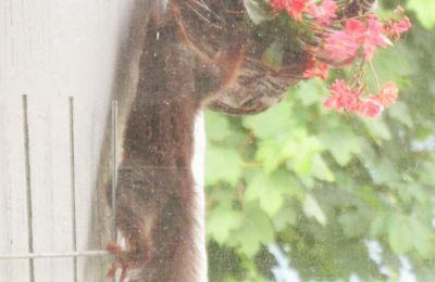 L'écureuil polisson