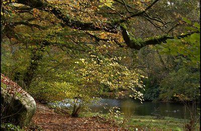Couleurs d'automne (suite): Bois de Kéroual à Guilers