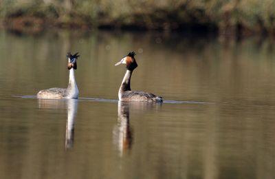 Divers oiseaux...