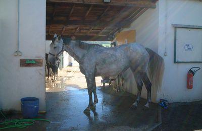 Equitation mais pas que ... l'autre Vie du monde équestre médisances et méchancetés.