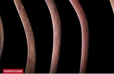 L'effet boomerang : un article du Temps sur l'exposition du musée d'éthnographie de Genève (MEG)