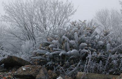 La photo du 18/02/17 : paysage gelé
