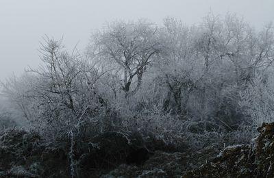 La photo du 16/02/17 : paysage gelé