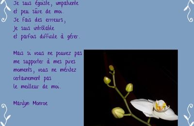 Citations et compagnie - Marilyn Monroe