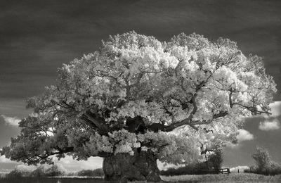 14 dernières années à photographier des arbres : l'oeuvre de la photographe de San Francisco Beth Moon