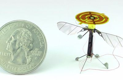 New robot bee may soon be a spy's secret weapon