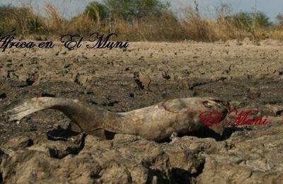 Un millón de mozambiqueños bajo la inseguridad alimentaria por sequía.