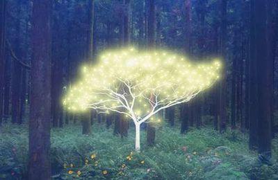 Comment utiliser l'énergie des arbres pour se soigner