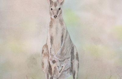 À vendre: Kangourou
