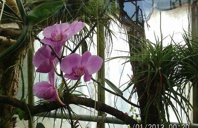 Jardin mexicain, pavillon des expositions temporaires, serres tropicales, pavillon des orchidées, La Tête d'Or
