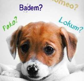 Les noms de chien turcs les plus branchés en  2015 ?
