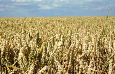 En 2016, la valeur ajoutée brute par actif agricole a diminué de 8,4 %