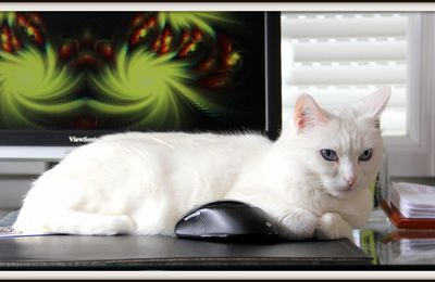 CLARA - Le chat et la souris !