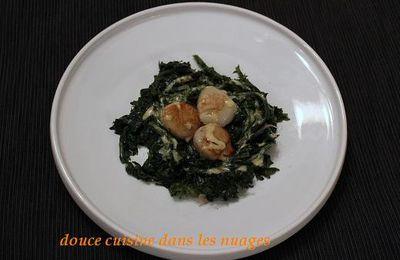 Noix de Saint Jacques, chou kale  Red Russian et Kari Gosse