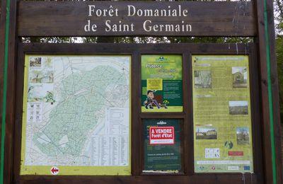Promenade en forêt de Saint-Germain-en laye