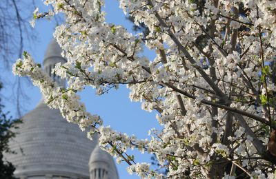 Le printemps à Montmartre. Photos.