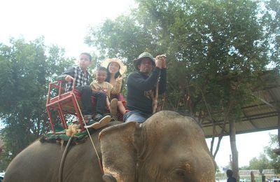Photos du village des éléphants dans la région de Surin