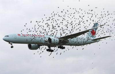 La collision entre un avion et un oiseau constitue une circonstance extraordinaire qui peut exempter le transporteur aérien de son obligation d'indemnisation en cas de retard important du vol
