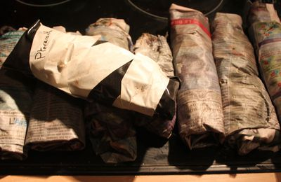 Les résultats du bouturage de rosiers papier journal-plastique