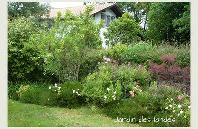 Quelques rosiers du jardin.
